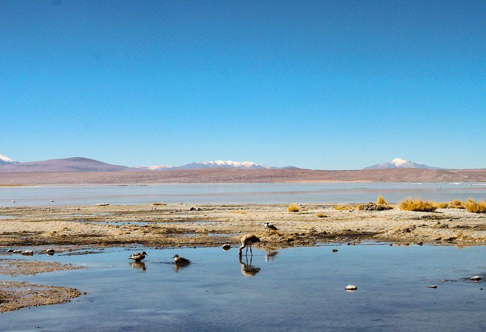 Geduld, Bolivia